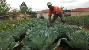 Farming Courses South Africa